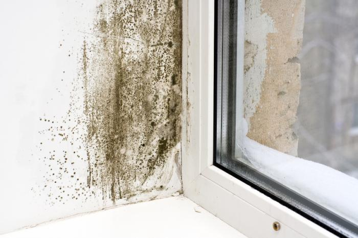 mold-old-home-vancouver
